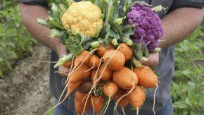 Hands Holding Vegetables
